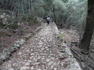 Camí vell de Lluc a Sóller, per l'interior del bosc de son Macip.